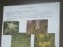 Predavanje biljke